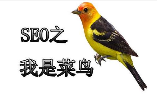 网络推广申请_重庆SEO_见效付费(图6)
